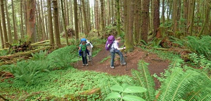 Next Adventure Backpack Oregon Coast green Sitka spruce forest