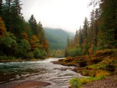 Clackamas River Beach View