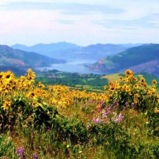 TRIP REPORT:  Columbia River Gorge Wildflower Hike