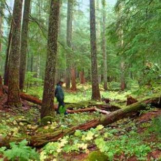 Oregon's Fungal Jungle