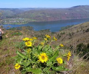 TRIP REPORT:  East Side Wildflower Hike