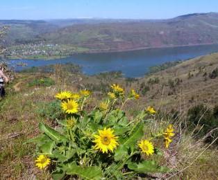 TRIP REPORT:  East Side Wildflower Hike