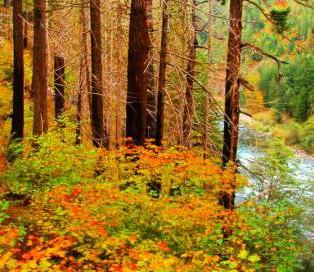 Trip Report: Pup Creek Falls Hike