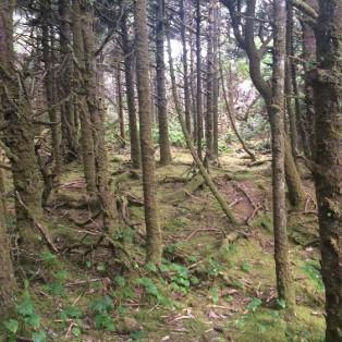Trip Report: Hobbit Beach