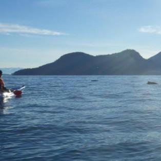 San Juans Sea Kayaking Trip