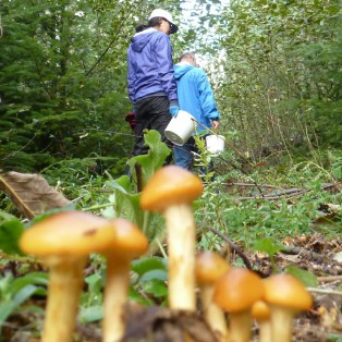Trip Report: Fall Mushroom Hikes