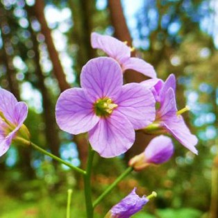 Spring Wildflower Hikes