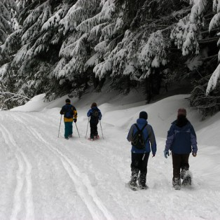 5 Reasons To Try Snowshoeing