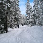 6b snowshoe crosstown