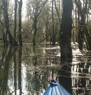 Trip Report: Kayaking Scappoose Bay