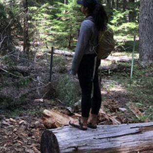 Trip Report: Timothy Lake Trail, Mt. Hood National Forest