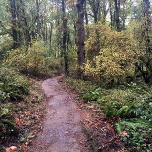Trip Report: Exploring the Mount Talbert Hiking Area