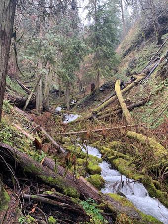 Wahkeena Falls Loop