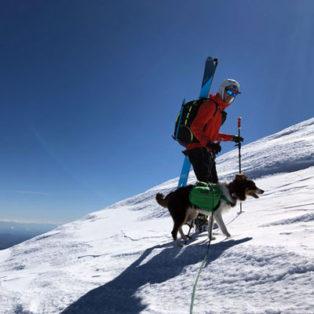 Cinder the dog reviews her Ruffwear Polar Trex Dog Boots!