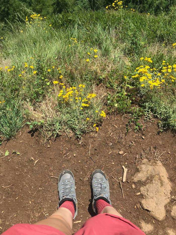 Patagonia Barely Baggies Shorts